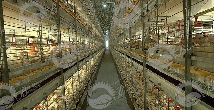 تولید و فروش تجهیزات مرغداری
